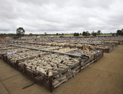Improving your farm business profitability- it's all in your taxation accounts